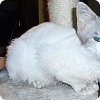 Adopt A Pet :: Alexa - Xenia, OH