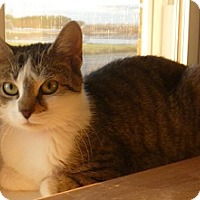 Adopt A Pet :: Nyema - Hamburg, NY