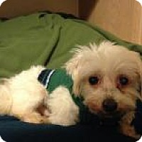 Adopt A Pet :: Kringle - South Amboy, NJ