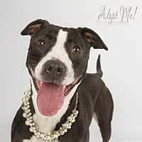 Adopt A Pet :: Piper - Shellsburg, IA