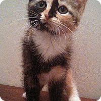 Adopt A Pet :: Keeli - Richmond, VA