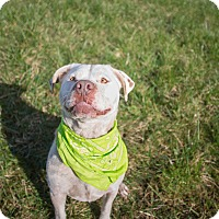 Adopt A Pet :: Kane - Portland, OR