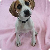 Adopt A Pet :: Hart - Pleasant Plain, OH