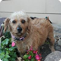 Adopt A Pet :: Millie - Sioux Falls, SD