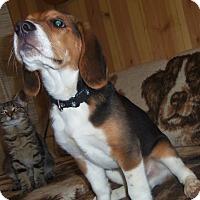 Adopt A Pet :: SPROCKET - Medford, WI