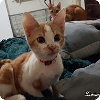Adopt A Pet :: Stone spaghettiface - McDonough, GA