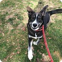 Adopt A Pet :: Max - Manhasset, NY