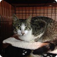 Adopt A Pet :: Sophia - East Brunswick, NJ