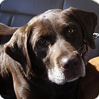 Adopt A Pet :: Hope - Purcellville, VA