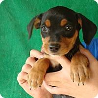 Adopt A Pet :: Tia - Oviedo, FL