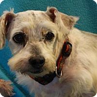 Adopt A Pet :: Skipper - Vacaville, CA