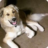 Adopt A Pet :: Beau - Valparaiso, IN