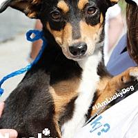 Adopt A Pet :: Jessie - Washington, DC