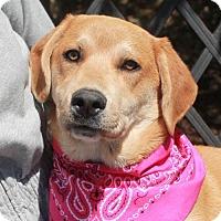 Adopt A Pet :: Matilda-PENDING - Garfield Heights, OH