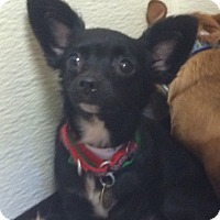 Adopt A Pet :: Beauty - Oak Ridge, NJ