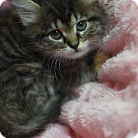 Adopt A Pet :: Adalaid - Manhattan, NY