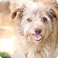 Adopt A Pet :: Amber - Woonsocket, RI