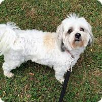 Adopt A Pet :: Benji - Buffalo, NY