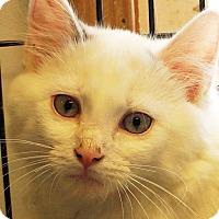 Adopt A Pet :: Archer - Sprakers, NY