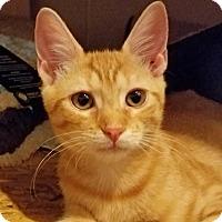 Adopt A Pet :: Dusty Rhoddes - Trevose, PA
