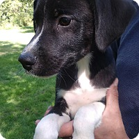 Adopt A Pet :: Dylan - Kendall, NY