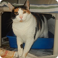 Adopt A Pet :: Cookie - Newport, NC