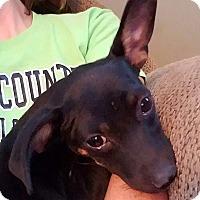 Adopt A Pet :: Mann - Ellaville, GA