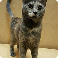 Adopt A Pet :: HOLLY - Brea, CA