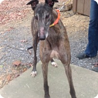 Adopt A Pet :: WW's Nava - Gerrardstown, WV