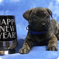 Adopt A Pet :: TITO - Westminster, CO
