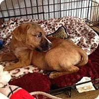 Adopt A Pet :: LANA-adoption pending - East Windsor, CT