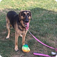 Adopt A Pet :: Mable - Red Lion, PA