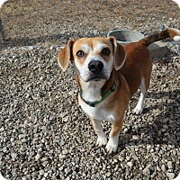 Adopt A Pet :: Kirby - Grinnell, IA