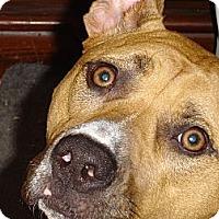 Adopt A Pet :: Lib - Silver Lake, WI