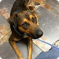 Adopt A Pet :: Jasmine - Kingwood, TX
