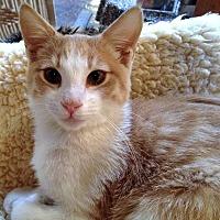 Adopt A Pet :: Rocio - Santa Fe, NM