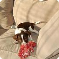 Adopt A Pet :: Lisa - Marlton, NJ