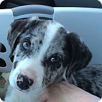 Adopt A Pet :: Jamee - McLoud, OK