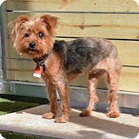 Adopt A Pet :: Winnie - Miami, FL