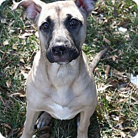 Adopt A Pet :: Priss - Burlington, NJ