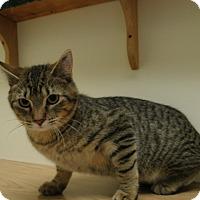 Adopt A Pet :: Rockafeller - Milwaukee, WI