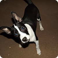 Adopt A Pet :: Maggie - Deer Lodge, TN