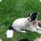 Adopt A Pet :: Serenity