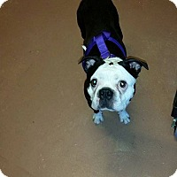 Adopt A Pet :: Ricky Bobby - Weatherford, TX