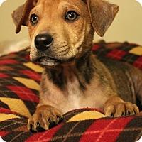 Adopt A Pet :: Sparrow - Sudbury, MA