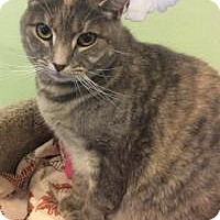Adopt A Pet :: Beatrice - Breinigsville, PA
