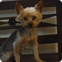 Adopt A Pet :: Lonnie - Homestead, FL