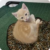 Adopt A Pet :: Zander - Chippewa Falls, WI