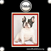 Adopt A Pet :: Stitch - Alabaster, AL