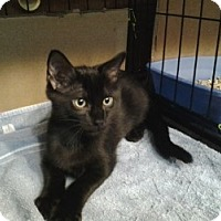 Adopt A Pet :: Buddy - Middletown, CT